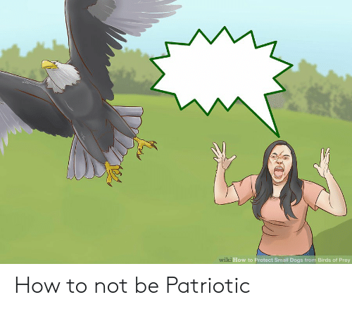Dogs, Birds, and How To: wiki How to Protect Small Dogs from Birds of Prey How to not be Patriotic