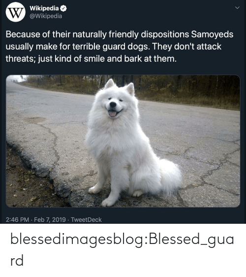 naturally: Wikipedia  W @Wikipedia  Because of their naturally friendly dispositions Samoyeds  usually make for terrible guard dogs. They don't attack  threats; just kind of smile and bark at them.  2:46 PM · Feb 7, 2019 · TweetDeck blessedimagesblog:Blessed_guard