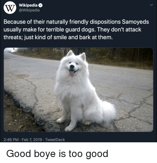 Dogs, Wikipedia, and Good: Wikipediae  @Wikipedia  Because of their naturally friendly dispositions Samoyeds  usually make for terrible guard dogs. They don't attack  threats; just kind of smile and bark at them.  2:46 PM Feb 7, 2019 TweetDeck Good boye is too good