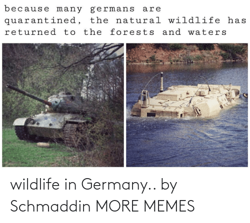 Germany: wildlife in Germany.. by Schmaddin MORE MEMES