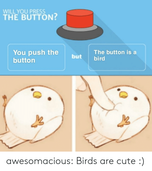 Cute, Tumblr, and Birds: WILL YOU PRESS  THE BUTTON?  You push the  buttorn  The button is a  but bird awesomacious:  Birds are cute :)