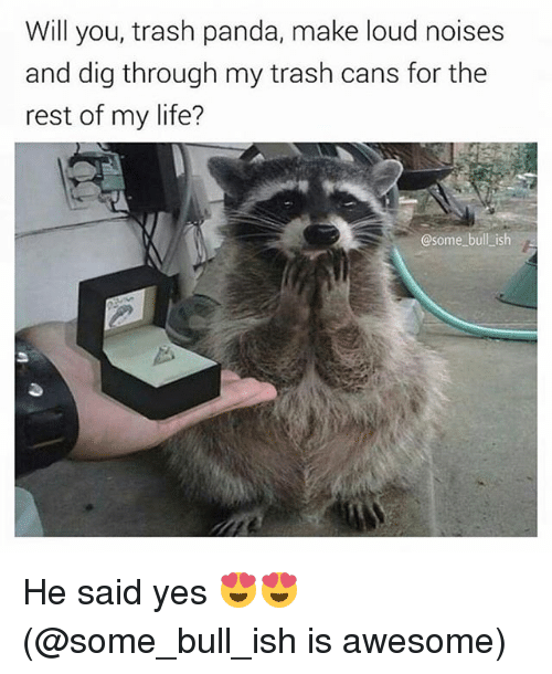 Life, Memes, and Trash: Will you, trash panda, make loud noises  and dig through my trash cans for the  rest of my life?  @some bull ish He said yes 😍😍 (@some_bull_ish is awesome)