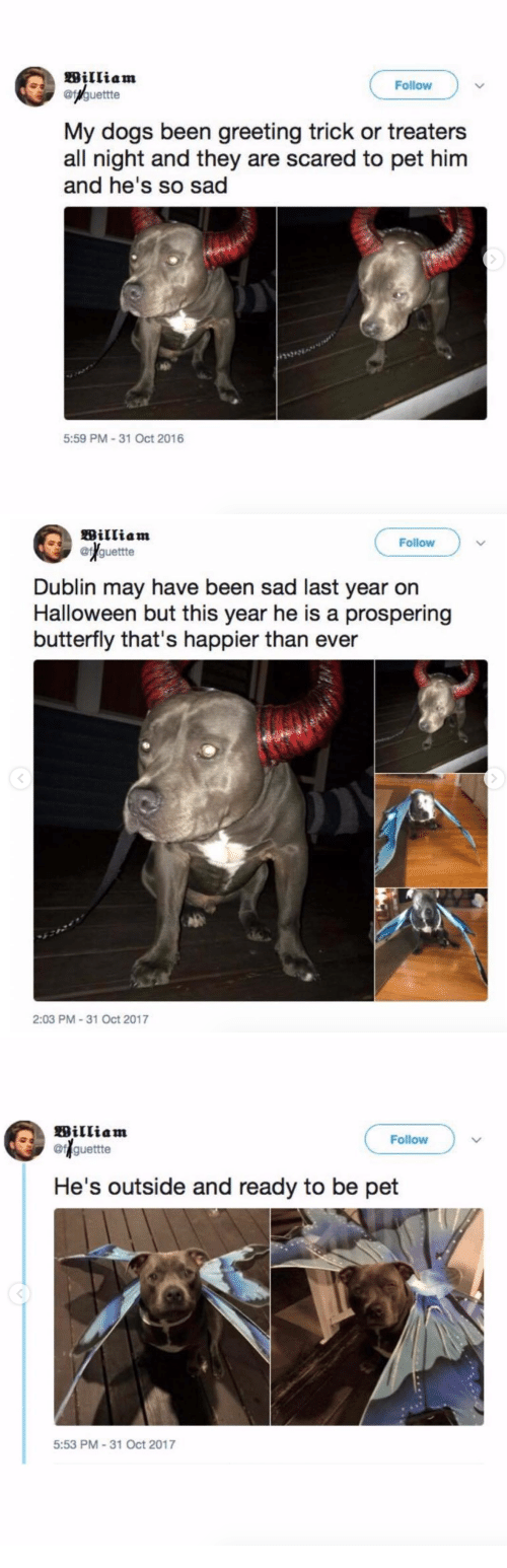 dublin: William  @/guettte  Follow  My dogs been greeting trick or treaters  all night and they are scared to pet him  and he's so sad  29342  5:59 PM-31 Oct 2016   William  @f guettte  Follow  Dublin may have been sad last year on  Halloween but this year he is a prospering  butterfly that's happier than ever  2:03 PM 31 Oct 2017   William  ofguettte  Follow  He's outside and ready to be pet  5:53 PM-31 Oct 2017