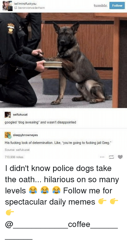 dogged: willmindfuckyou  tumblr  Follow  baronvonvaderham  seifukucat  googled dog swearing and wasn't disappointed  sleepybrowneyes  His fucking look of detemination. Like, you're going to fucking jail Greg.  Source: seifukucat  713,938 notes I didn't know police dogs take the oath... hilarious on so many levels 😂 😂 😂 Follow me for spectacular daily memes 👉 👉 👉 @____________coffee____________