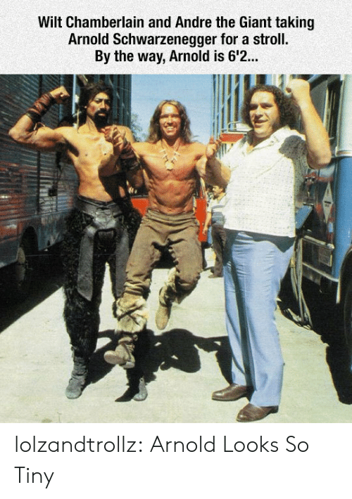Arnold Schwarzenegger: Wilt Chamberlain and Andre the Giant taking  Arnold Schwarzenegger for a stroll.  By the way, Arnold is 6'2... lolzandtrollz:  Arnold Looks So Tiny