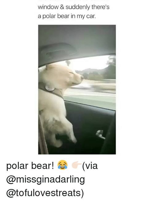 polarized: window & suddenly there's  a polar bear in my car. polar bear! 😂 👉🏻(via @missginadarling @tofulovestreats)