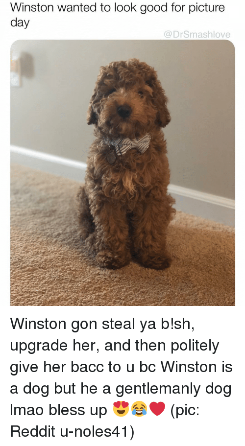 Bacc: Winston wanted to look good for picture  day  @DrSmashlove Winston gon steal ya b!sh, upgrade her, and then politely give her bacc to u bc Winston is a dog but he a gentlemanly dog lmao bless up 😍😂❤️ (pic: Reddit u-noles41)