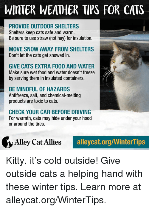 alley cats: WinTER WEATHER TIPS FOR CATS  PROVIDE OUTDOOR SHELTERS  Shelters keep cats safe and warm.  Be sure to use straw (not hay) for insulation.  MOVE SNOW AWAY FROM SHELTERS  Don't let the cats get snowed in.  GIVE CATS EXTRA F00D AND WATER  Make sure wet food and water doesn't freeze  by serving them in insulated containers.  BE MINDFUL OF HAZARDS  Antifreeze, salt, and chemical melting  products are toxic to cats.  CHECK YOUR CAR BEFORE DRIVING  For warmth, cats may hide under your hood  or around the tires.  Alley Cat Allies  alleycat.org/WinterTips Kitty, it's cold outside! Give outside cats a helping hand with these winter tips. Learn more at alleycat.org/WinterTips.