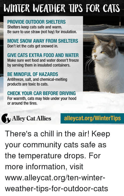 alley cats: WinTER WEATHER TIPS FOR CATS  PROVIDE OUTDOOR SHELTERS  Shelters keep cats safe and warm.  Be sure to use straw (not hay) for insulation.  MOVE SNOW AWAY FROM SHELTERS  Don't let the cats get snowed in.  GIVE CATS EXTRA F00D AND WATER  Make sure wet food and water doesn't freeze  by serving them in insulated containers.  BE MINDFUL OF HAZARDS  Antifreeze, salt, and chemical melting  products are toxic to cats.  CHECK YOUR CAR BEFORE DRIVING  For warmth, cats may hide under your hood  or around the tires.  Alley Cat Allies  alleycat.org/WinterTips There's a chill in the air! Keep your community cats safe as the temperature drops. For more information, visit www.alleycat.org/ten-winter-weather-tips-for-outdoor-cats