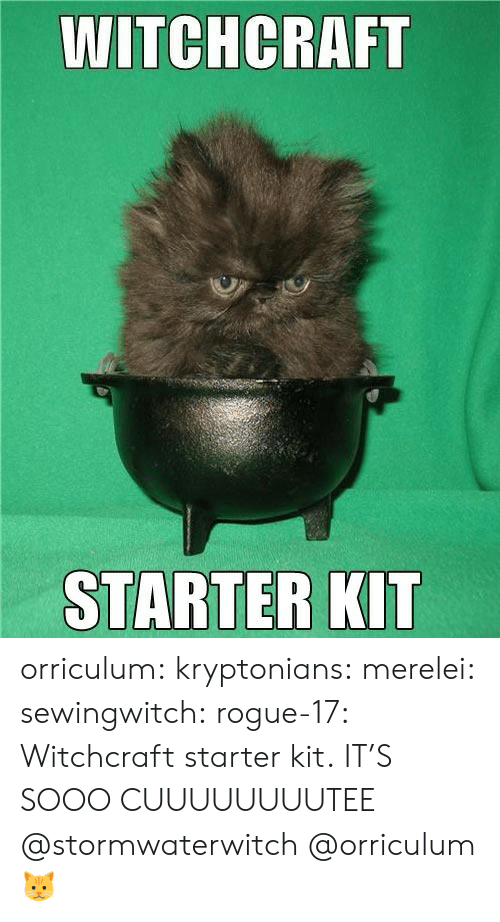 Tumblr, Blog, and Http: WITCHCRAFT  STARTER KIT orriculum:  kryptonians:  merelei: sewingwitch:  rogue-17:  Witchcraft starter kit.  IT'S SOOO CUUUUUUUUTEE  @stormwaterwitch   @orriculum   🐱