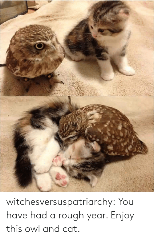 year: witchesversuspatriarchy:  You have had a rough year. Enjoy this owl and cat.