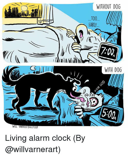 dogging: WITHOUT DOG  T00  EARLY  7:00  WITH DOG  5:00 Living alarm clock (By @willvarnerart)