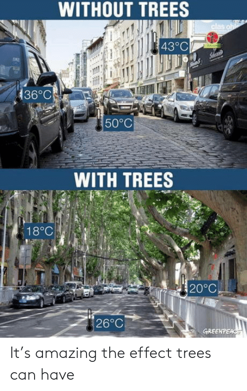 Trees, Amazing, and Greenpeace: WITHOUT TREES  clas oh  43°C  136°C  50°C  WITH TREES  18°C  20°C  26°C  GREENPEACE It's amazing the effect trees can have