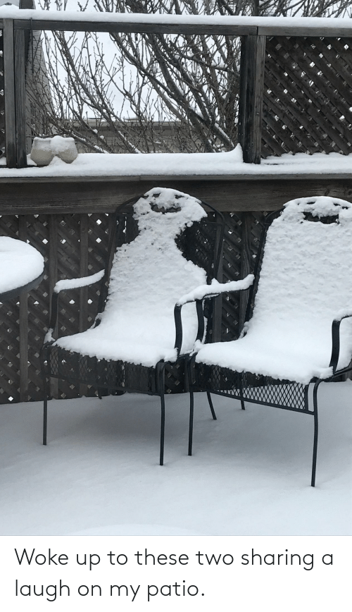 sharing: Woke up to these two sharing a laugh on my patio.