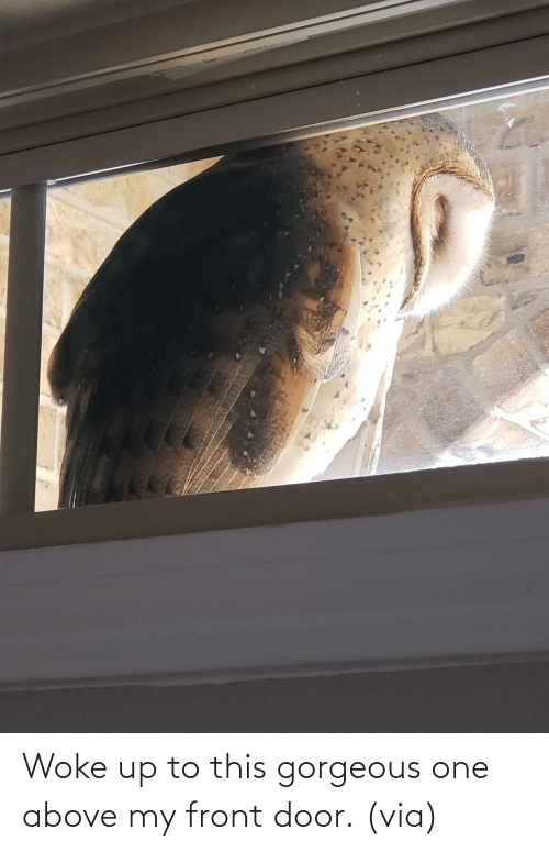 Front Door: Woke up to this gorgeous one above my front door. (via)