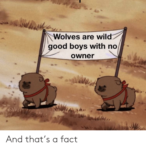 Good, Wild, and Wolves: Wolves are wild  good boys with no  Owner And that's a fact