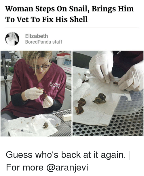 guess whos back: Woman Steps on Snail, Brings Him  To Vet To Fix His Shell  Elizabeth  Bored Panda staff Guess who's back at it again. | For more @aranjevi