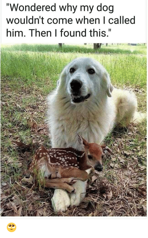 """Dog, Him, and Why: """"Wondered why my dog  wouldn't come when I called  him. Then I found this."""" 🥺"""