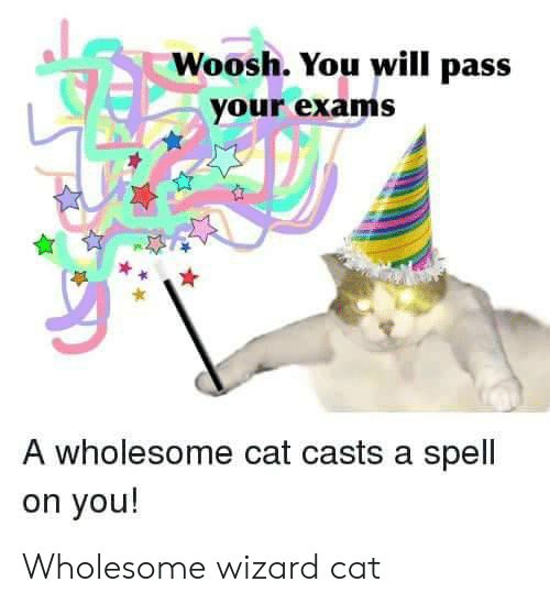 woosh: Woosh. You will pass  your exams  A wholesome cat casts a spell  on you! Wholesome wizard cat
