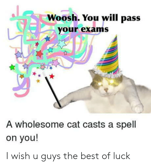 woosh: Woosh. You will pass  your exams  A wholesome cat casts a spell  on you! I wish u guys the best of luck