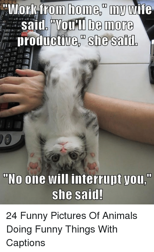 """Funny Pictures Of: """"Workfrom home.""""my wife  Said. """"VOu'll be more  productive, she said  """"No one will interrupt you,""""  she said! 24 Funny Pictures Of Animals Doing Funny Things With Captions"""