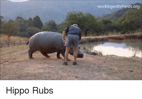 ✅ 25+ Best Memes About Hippo Fart | Hippo Fart Memes