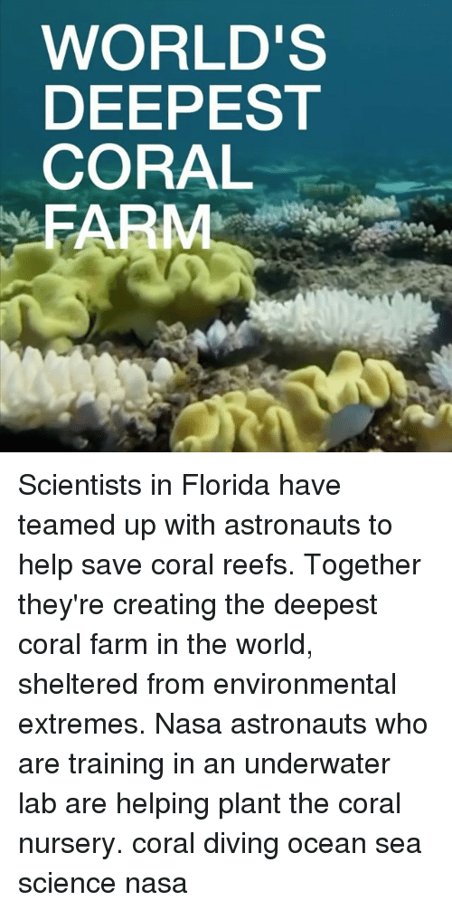Memes, Nasa, and Florida: WORLD'S  DEEPEST  CORAL  FARM Scientists in Florida have teamed up with astronauts to help save coral reefs. Together they're creating the deepest coral farm in the world, sheltered from environmental extremes. Nasa astronauts who are training in an underwater lab are helping plant the coral nursery. coral diving ocean sea science nasa