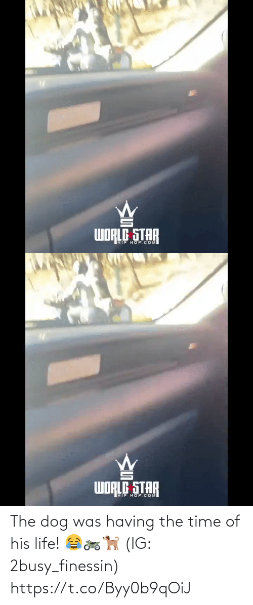 Hip Hop: WORLG STAR  HIP HOP.COM   WORLG STAR  HIP HOP.COM The dog was having the time of his life! 😂🏍🐕 (IG: 2busy_finessin) https://t.co/Byy0b9qOiJ