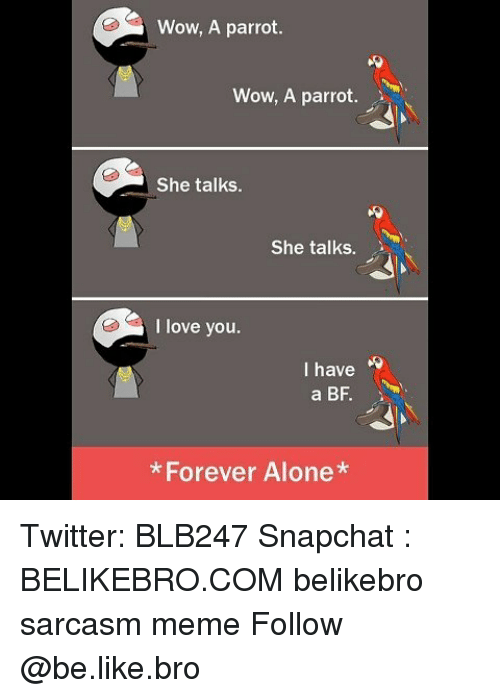 I Have A Bf: Wow, A parrot  Wow, A parrot  She talks.  She talks.  I love you  I have  a BF  *Forever Alone Twitter: BLB247 Snapchat : BELIKEBRO.COM belikebro sarcasm meme Follow @be.like.bro