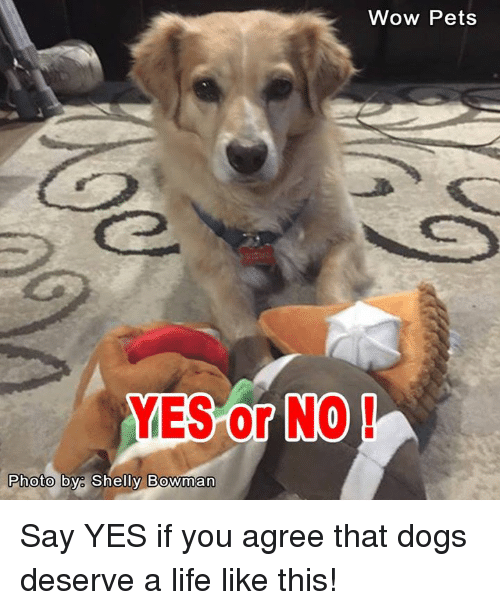 Shellie: Wow Pets  YES or NO  Photo by Shelly Bowman Say YES if you agree that dogs deserve a life like this!