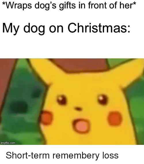 Christmas, Dogs, and Her: *Wraps dog's gifts in front of her*  My dog on Christmas  mgflip.com Short-term remembery loss