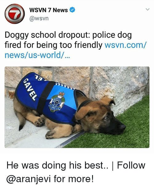 dogged: WSVN 7 News e  @wsvn  Doggy school dropout: police dog  fired for being too friendly wsvn.com/  news/us-world/  90 He was doing his best..   Follow @aranjevi for more!