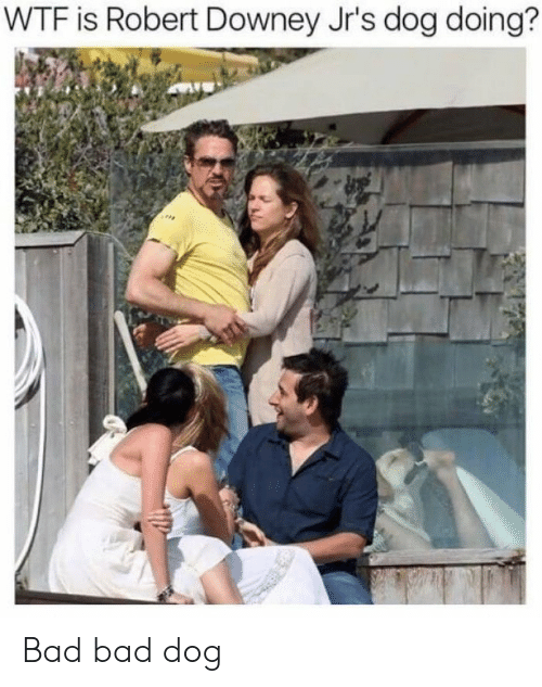 Robert Downey Jr.: WTF is Robert Downey Jr's dog doing? Bad bad dog