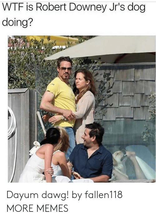Robert Downey Jr.: WTF is Robert Downey Jr's dog  doing? Dayum dawg! by fallen118 MORE MEMES