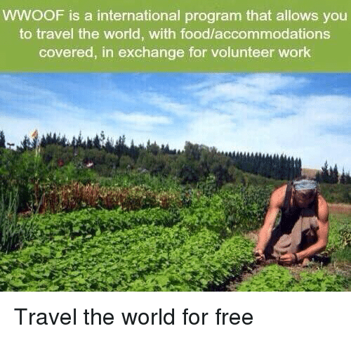 Accommodator: WWOOF is a international program that allows you  to travel the world, with food/accommodations  covered, in exchange for volunteer work Travel the world for free
