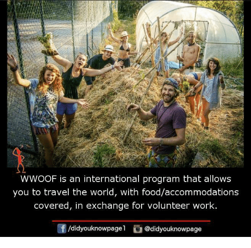 accommodating: WWOOF is an international program that allows  you to travel the world, with food/accommodations  covered, in exchange for volunteer work  /didyouknowpagel  Cu  @didyouknowpage
