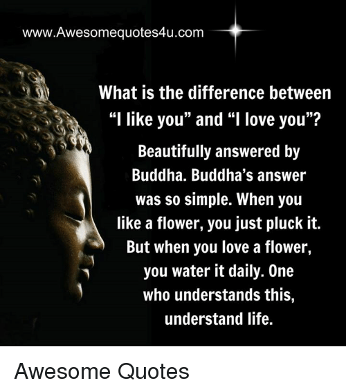 """you beauty: www.Awesomequotes4u.com  What is the difference between  """"I like you"""" and """"I love you""""?  Beautifully answered by  Buddha. Buddha's answer  was so simple. When you  like a flower, you just pluck it.  But when you love a flower,  you water it daily. One  who understands this,  understand life. Awesome Quotes"""