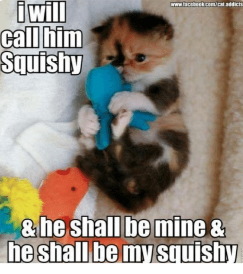 My Squishy: www.tacebook.com/cat addicts  i Will  call him  Squishy  8 he shall be mine  he shall be my squishy