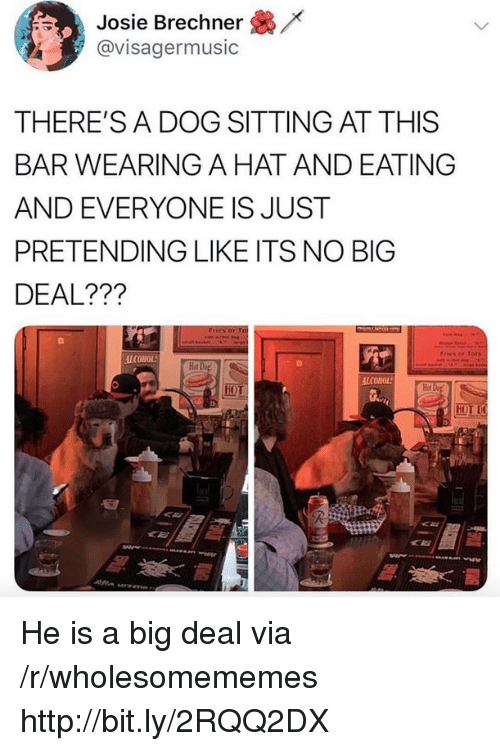Alcohol, Http, and Dog: /x  Josie Brechner  @visagermusic  THERE'S A DOG SITTING AT THIS  BAR WEARING A HAT AND EATING  AND EVERYONE IS JUST  PRETENDING LIKE ITS NO BIG  DEAL???  Fries or Tots  ALCOHOL  Hot  Hot  HOT He is a big deal via /r/wholesomememes http://bit.ly/2RQQ2DX