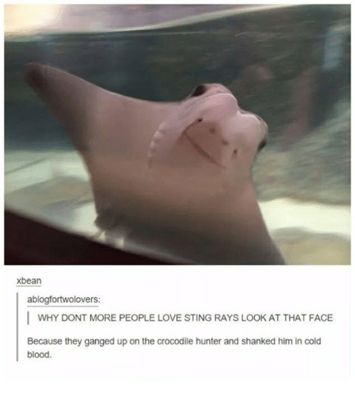 Stingly: xbean  ablogfortwolovers:  I WHY DONT MORE PEOPLE LOVE STING RAYS LOOK AT THAT FACE  Because they ganged up on the crocodile hunter and shanked him in cold  blood