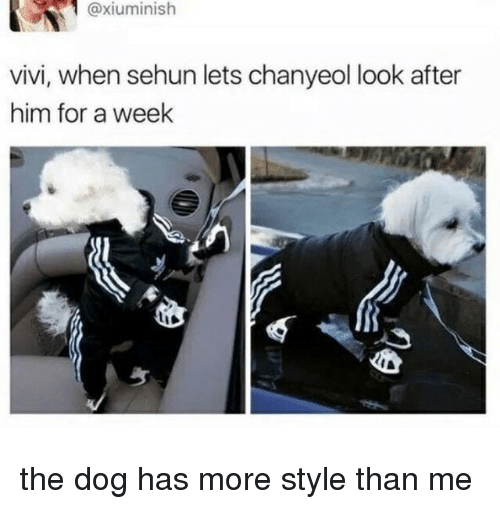 Chanyeol: @xiuminish  vivi, when sehun lets chanyeol look after  him for a week the dog has more style than me