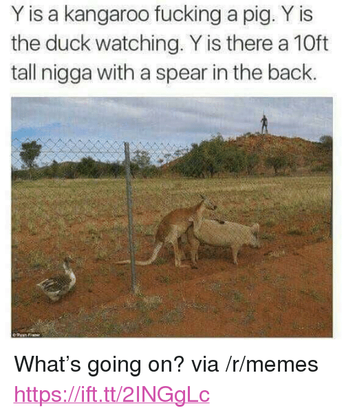 "Fucking, Memes, and Duck: Y is a kangaroo fucking a pig. Y is  the duck watching. Y is there a 10ft  tall nigga with a spear in the back. <p>What's going on? via /r/memes <a href=""https://ift.tt/2INGgLc"">https://ift.tt/2INGgLc</a></p>"