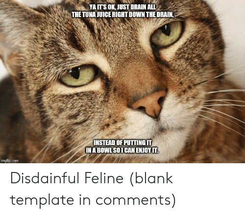 Its Ok: YA ITS OK, JUST DRAIN ALL  THE TUNA JUICE RIGHT DOWN THE DRAIN,  INSTEAD OF PUTTING IT  IN A BOWL SOI CAN ENJOY IT.  imgflip.com Disdainful Feline (blank template in comments)