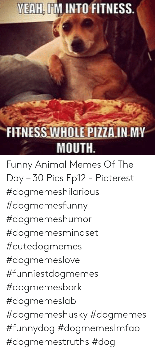 funny animal memes: YEAH, I'M INTO FITNESS  FITNESS WHOLE PIZZA.INMY  MOUTH Funny Animal Memes Of The Day – 30 Pics Ep12 - Picterest #dogmemeshilarious    #dogmemesfunny #dogmemeshumor #dogmemesmindset #cutedogmemes #dogmemeslove    #funniestdogmemes #dogmemesbork #dogmemeslab #dogmemeshusky #dogmemes    #funnydog #dogmemeslmfao #dogmemestruths #dog