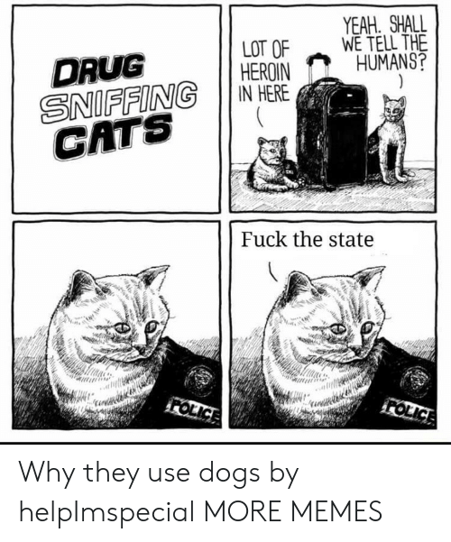 Cats, Dank, and Dogs: YEAH. SHALL  WE TELL THE  HUMANS?  LOT OF  HEROIN  IN HERE  DRUG  SNIFFING  CATS  Fuck the state  FOLICE  FOLICE Why they use dogs by helpImspecial MORE MEMES