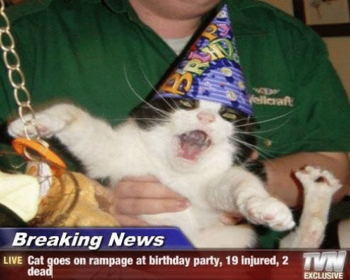 Goes On: yellaraft  Breaking News  TN  LIVE Cat goes on rampage at birthday party, 19 injured, 2  dead  EXCLUSIVE