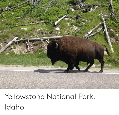 Yellowstone, Yellowstone National Park, and Park: Yellowstone National Park, Idaho