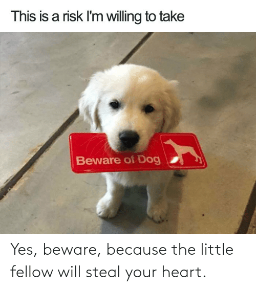 steal: Yes, beware, because the little fellow will steal your heart.