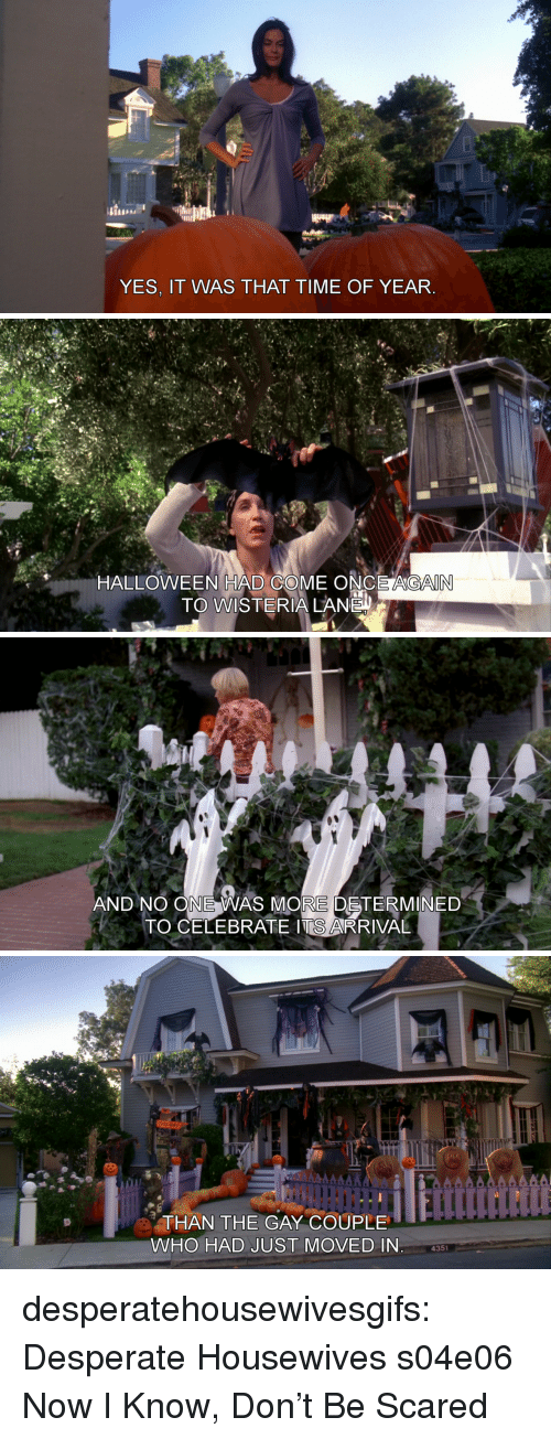 Yes It Was: YES, IT WAS THAT TIME OF YEAR   HALLOWEEN HAD COME ONCE AGAIN  TO WISTERIA LANE   AND NO ONE WAS MORE DETERMINED  TO CELEBRATE ITS ARRIVAL   THAN THE GAY COUPLE  WHO HAD JUST MOVED IN  4351 desperatehousewivesgifs: Desperate Housewives s04e06 Now I Know, Don't Be Scared