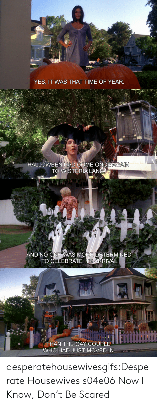 Yes It Was: YES, IT WAS THAT TIME OF YEAR   HALLOWEEN HAD COME ONCE AGAIN  TO WISTERIA LANE   AND NO ONE WAS MORE DETERMINED  TO CELEBRATE ITS ARRIVAL   THAN THE GAY COUPLE  WHO HAD JUST MOVED IN  4351 desperatehousewivesgifs:Desperate Housewives s04e06 Now I Know, Don't Be Scared